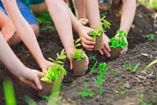 Mô hình trồng hàng triệu cây xanh để khắc phục những thiếu sót trong việc tái trồng rừng
