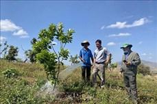 Chuyên canh cây ăn quả trên vùng trọng điểm hồ tiêu Chư Pưh