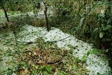 Mưa đá gây thiệt hại tại tỉnh Điện Biên