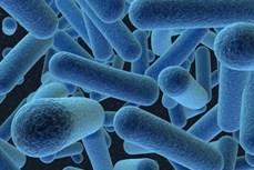 Bồ Đào Nha chế tạo hệ thống sinh học có thể sản xuất hydro từ vi khuẩn