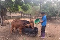 Đòn bẩy giúp giảm nghèo bền vững ở Vĩnh Phúc