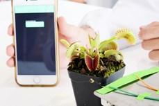 Singapore chế tạo robot thực vật có thể nhặt được những vật thể mỏng