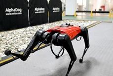Trung Quốc phát triển chó công nghệ có tốc độ nhanh nhất hiện nay