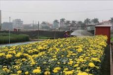 Phát triển hoa, cây cảnh là lĩnh vực quan trọng trong xây dựng nông thôn mới