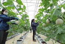 Dịch COVID-19: Đề xuất chính sách hỗ trợ bổ sung cho sản xuất nông nghiệp