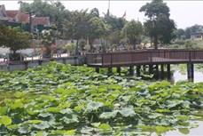 Phát triển cây sen gắn với du lịch ở xã Kim Liên