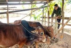 Chị Hà Thị Nguyễn được ngưỡng mộ vì sản xuất, kinh doanh giỏi