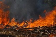 Cảnh báo nguy cơ cháy rừng ở Quảng Ngãi do nắng nóng gay gắt