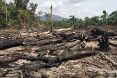 Gia Lai: Để mất hàng trăm hecta rừng, nguyên Trưởng ban Quản lý rừng bị truy tố