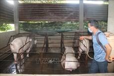 Phòng, chống dịch bệnh trên gia súc, gia cầm mùa mưa