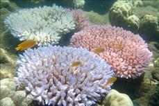 Các nhà khoa học ủng hộ kế hoạch của UNESCO đối với rạn san hô Great Barrier