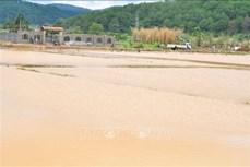 Mưa lớn nhấn chìm hơn 100 hecta vùng chuyên canh rau, hoa ở Lâm Đồng