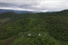 Sơn La chủ động ngăn chặn tình trạng phá rừng làm nương rẫy