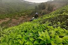 Yên Bái tăng giá trị sản phẩm trên cùng diện tích đất trồng trọt