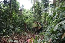 Gia Lai nỗ lực hoàn thành mục tiêu trồng rừng