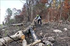 Rừng thuộc Di tích lịch sử Hội trường Mùa Xuân bị xâm hại