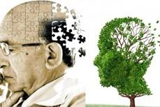 Nghiên cứu về liệu pháp phòng ngừa bệnh Alzheimer ở người cao tuổi