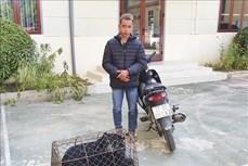 Bắt đối tượng mua bán, vận chuyển gấu hoang dã ở Điện Biên