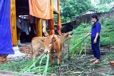 Hiệu quả từ chương trình hỗ trợ giảm nghèo bền vững ở huyện Quỳ Châu