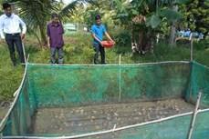Mô hình nuôi ếch xen cá cho hiệu quả cao của anh Nguyễn Minh Nhựt