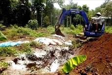 Khẩn trương khống chế 3 ổ dịch tả lợn châu Phi tại Bình Phước