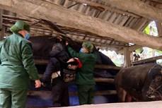 Rét hại tăng cường, Lào Cai đôn đốc nhân dân phòng tránh rét cho cây trồng, vật nuôi