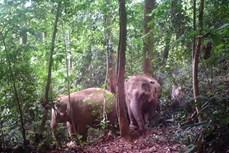 Nỗ lực bảo tồn các loài động vật hoang dã tại vườn quốc gia