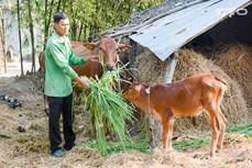 Sóc Trăng nỗ lực giảm nhanh hộ nghèo ở vùng đồng bào Khmer