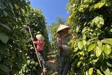 Sản phẩm OCOP ở Gia Lai giúp tăng thu nhập cho người dân nông thôn