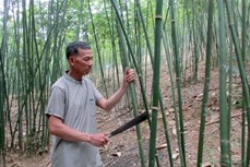 Hướng mới trong phát triển kinh tế vùng biên Thanh Hóa