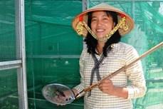 Chị Nguyễn Thị Lan khởi nghiệp thành công với mô hình nuôi cà cuống