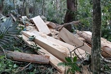 Phát hiện vụ phá rừng trái phép tại huyện Mang Yang