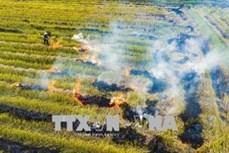 Đốt rơm rạ và các giải pháp thay thế tại Hà Nội