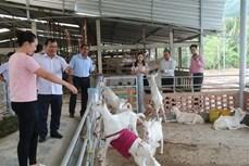 Tiền Giang huy động nguồn lực xây dựng nông thôn mới