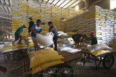 越南工贸部将严管各国际口岸大米出口活动