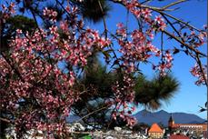 农耕文化旅游——林同省旅游业 新发展方向