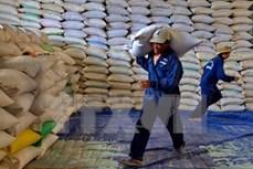 亚洲四个国家竞标向菲律宾供应30万吨大米