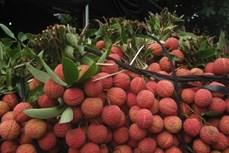 让越南水果走向世界