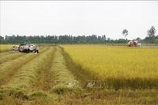 一周农产品市场:稻谷价格稳定 咖啡价格下降