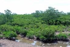 太平省泰瑞湿地自然保护区正式成立
