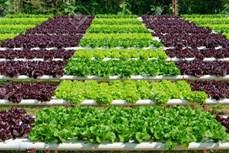 越南力争到2025年有机农业用地占1.5-2%