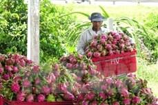 今年前5月越南对泰国的农产品出口额猛增