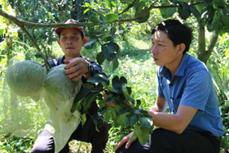 受干旱和海水入侵袭击中期和后期的绿皮柚子栽培注意事项