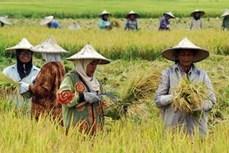 印尼与土耳其一致同意将双边农产品贸易额提升至100亿美元