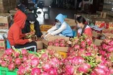 EVFTA:更多越南农产品即将进军欧盟市场