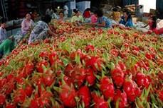 2020年前9月越南果蔬出口达25亿美元