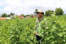 种桑养蚕业可持续发展的方向