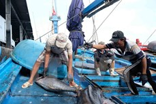 《东盟今日》高度评价越南在打击非法捕捞行为中所作出的努力