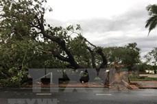 第13号台风袭击 越南中部地区损失严重