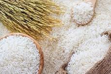 越南出口大米售价创9年来新高